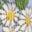 Multi Baby Florabunda