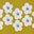 Dijon Daisy Stripe