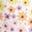 Ivory Daisy Rainbow