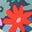 Multi Paintbox Floral
