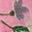 Pink Lemonade Vintage Daisy
