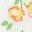Sweetcorn Yellow Roses