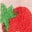 Boto Pink Ditsy Strawberries